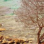 Tree by the Water by indiemod