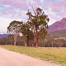 Rosey Dawn over Mt Barney, South-East Queensland, Australia by Michael Boniwell