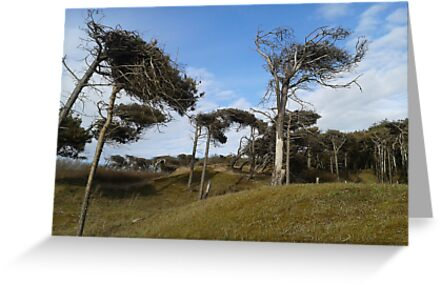 Dune Trees in the Wind by damianaashe