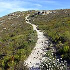 Mountain trail to the end of the earth by Antionette