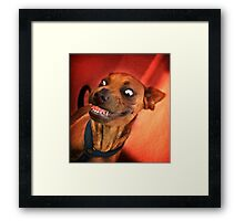 Dogs with game face on .15 Framed Print