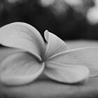 Black and White Frangipani 3 by Emily McAuliffe