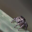 Little Jumper by Josh Gudde