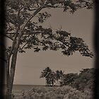 Tree on the Bay by Emily McAuliffe