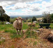 Rural Paradise, Tumut, NSW, Australia. by kaysharp
