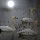 The Swan Song by Charles &amp; Patricia   Harkins ~ Picture Oregon
