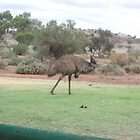 Emu by James Dart by Heather Dart