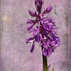 Early Marsh Orchid by viennablue