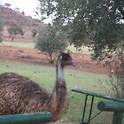 Emu by James Dart Broken Hill  by Heather Dart