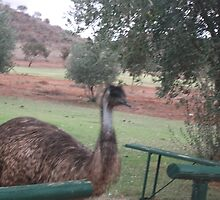 Emu by James Dart Broken Hill  by Heather Dart