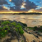 Bushmans River in Golden Light by Rob  Southey