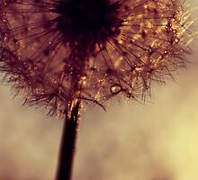 droplets of gold by Ingz