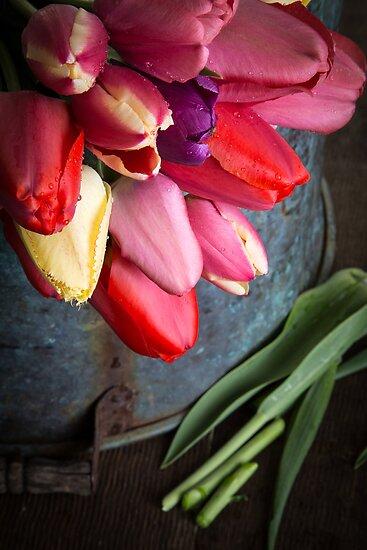 Spring Tulip Flowers by Edward Fielding