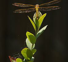 Dragonfly Resting on Blueberry Bush by ValeriesGallery