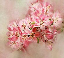 appleblossom by lucyliu