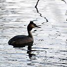 I'm A Great Crested Grebe by Sauropod8
