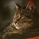 A Very Relaxed Cat Called 'Mosey' by ArtofOrdinary