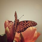 Vintage butterfly by Kelsey Williams