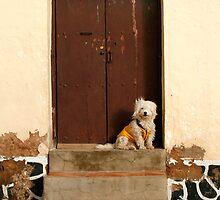 Potosi, Bolivia 4286 by Mart Delvalle