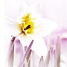 simple sunshine in a daffodil by Nicole  McKinney