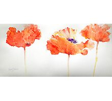 Poppy Trio Photographic Print