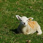 Very Young Lamb by glynk