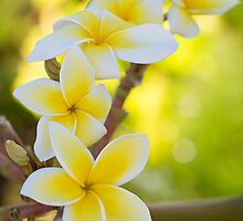 I Heart Maui by SynappedPhoto