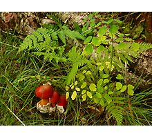 Red Mushrooms and Ferns Photographic Print