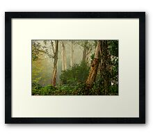 Textures 2  - Mount Wilson - NSW  - The HDR Experience Framed Print