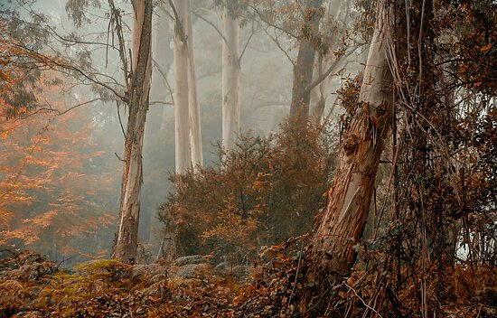 Textures - Mount Wilson - NSW  - THE HDR Experience by Philip Johnson