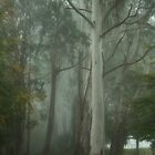 Mount Wilson Fantasy - Mount Wilson NSW - The HDR Experience by Philip Johnson