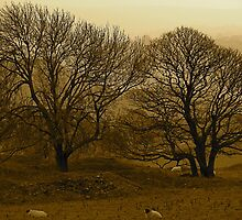 Trees, sheep and peak District by Jamie Parker
