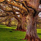 Mighty Oaks by gardencottage