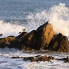 Seagull on the rock at rise by sdimartino
