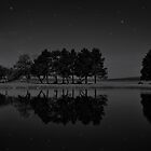 Tree Line at Night by Jane Ruttkayova