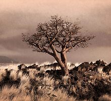 Tree at Dusk in Waikoloa by Ellen Cotton