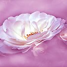 Beauty in the Mist - Pink by Dawn B Davies-McIninch
