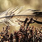 12.5.2013: Feather with Morning Light by Petri Volanen