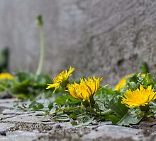 Yellow in the Grey by James Taylor