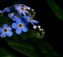 FORGET ME NOT by snapdecisions