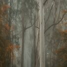 Sturdy Individuals - Mount Wilson,NSW - The HDR Experience by Philip Johnson