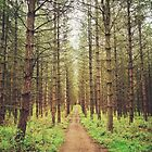Long path in the woods by jrsisson