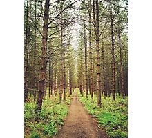 Long path in the woods Photographic Print