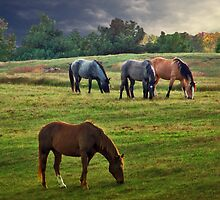 Evening Grazing by debidabble