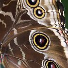 Butterfly Close Up! by Jonathan  Ladd