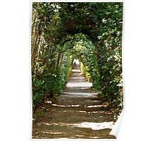 Boboli: archway of trees Poster