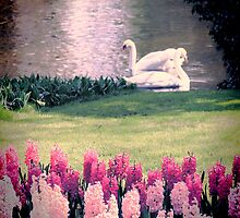 Two Swans by Jasna