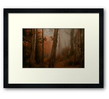 Bushland Solitude  - Mount Wilson - NSW  - The HDR Experience Framed Print