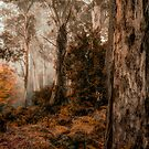 Bush Guardians  - Mount Wilson - NSW  - The HDR Experience by Philip Johnson