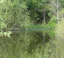 Refections on the Pond Water by PicsbyJody